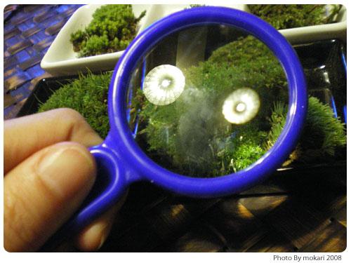 20081016-1 第4回「苔の話到着、今日買った苔グッズ」