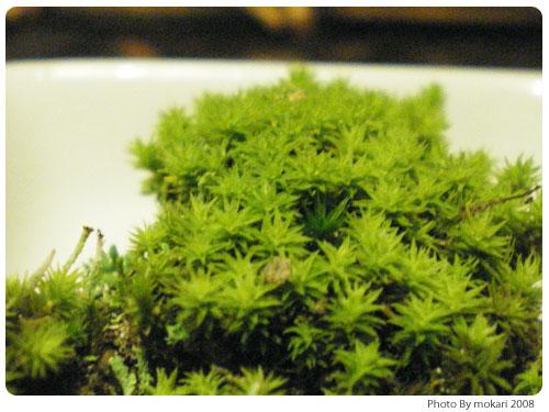 20081016-3 第4回「苔の話到着、今日買った苔グッズ」
