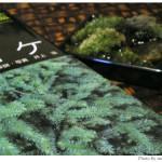 第5回「苔の変化。苔の種類を調べる」