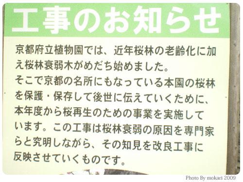 20090208-2 京都府立植物園の桜再生改良工事を見て