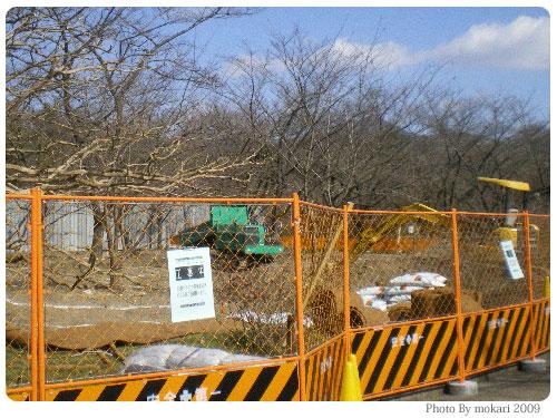 20090208 京都府立植物園の桜再生改良工事を見て