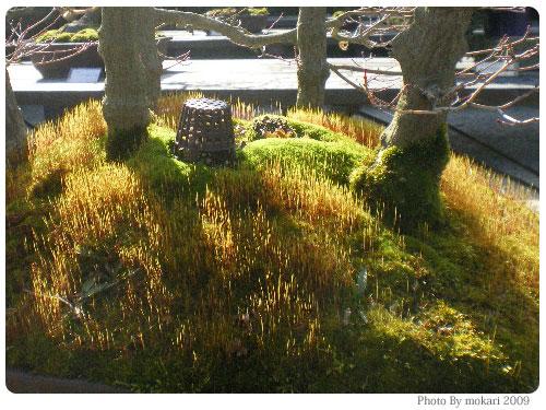 20090225-1 京都府立植物園で盆栽をみて盆栽っていいな。と思った。