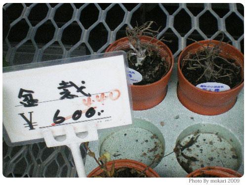 20090225-3 京都府立植物園で盆栽をみて盆栽っていいな。と思った。