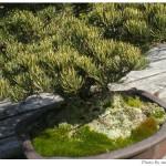 京都府立植物園で盆栽をみて盆栽っていいなと思った
