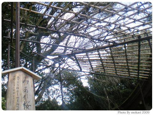 20090318-9 京都上賀茂神社の「みあれ桜」は「そうだ 京都、行こう。」です