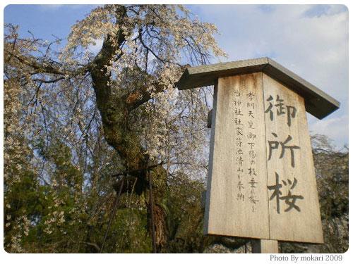 20090410-3 京都市花見:上賀茂神社2009年