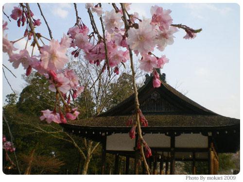 20090410-8 風流桜 京都市花見:上賀茂神社2009年