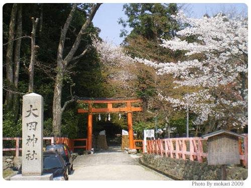 20090410 京都市花見:大田神社2009年