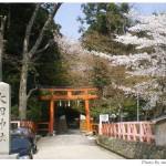京都花見:大田神社2009年