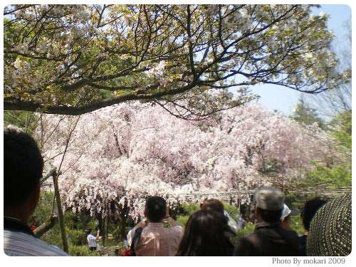 平安神宮神苑花見2009年