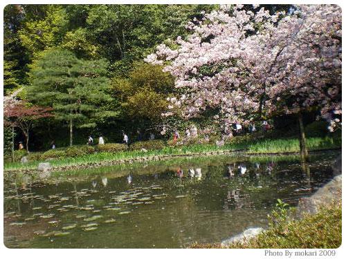 平安神宮神苑花見の鯉や亀