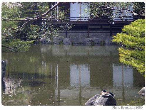 平安神宮 神苑 花見 2009年
