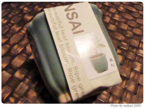 20091117-6 イノブンで買った盆栽セット