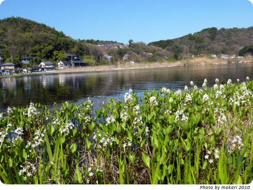 20100412-1 京都市花見:深泥池2010年