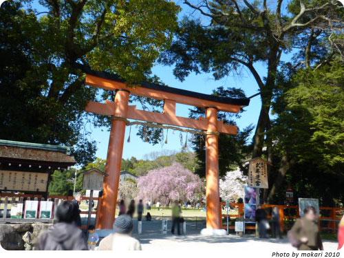 20100412-12 京都市花見:上賀茂神社2010年 斎王桜