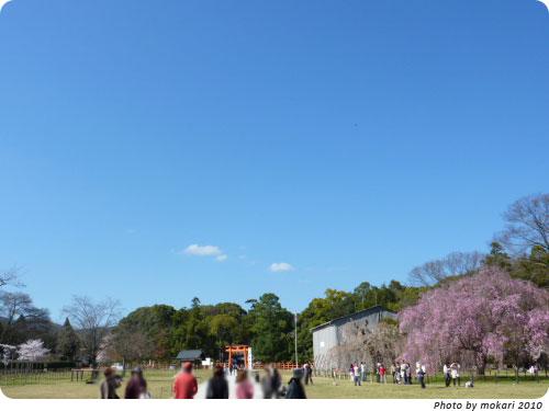 20100412-13 京都市花見:上賀茂神社2010年 御所桜