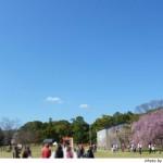 京都花見:上賀茂神社2010年 御所桜