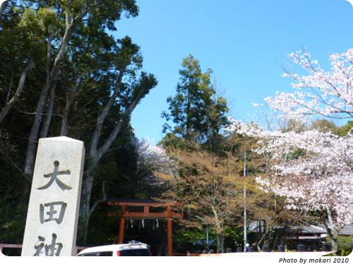 20100412-4 京都市花見:大田神社2010年