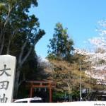 京都花見:大田神社2010年4月
