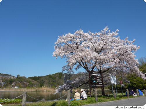 20100412 京都市花見:深泥池2010年