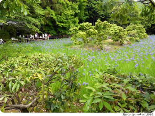 20100509-7 大田神社2010年 カキツバタ群落を見に