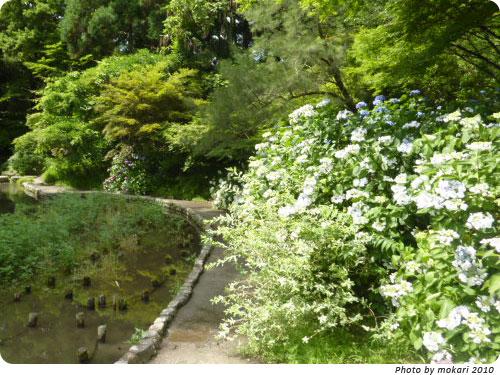 20100629-9 2010年京都府立植物園のあじさいと、園長さんありがとう。