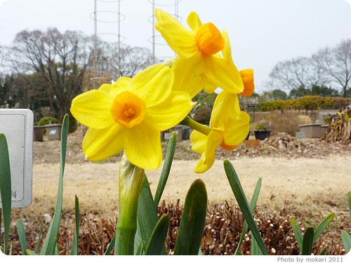 201103018-11 京都府立植物園に梅を見に(2011年3月)