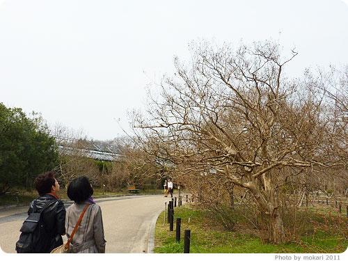 201103018-12 京都府植物園