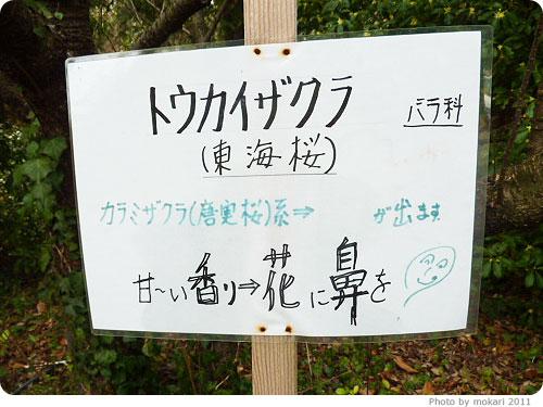 201103018-18 京都府立植物園に梅を見に(2011年3月)