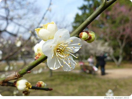 201103018-6 京都御所に梅を見に(2011年3月)