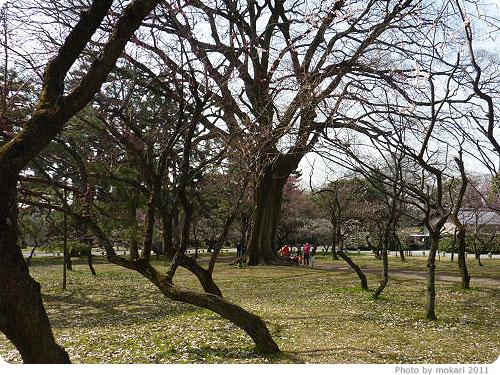 201103018-7 京都御所に梅を見に(2011年3月)