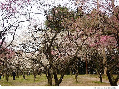 201103018-8 京都府立植物園に梅を見に(2011年3月)