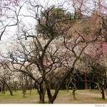 京都府立植物園に梅を見に(2011年3月)