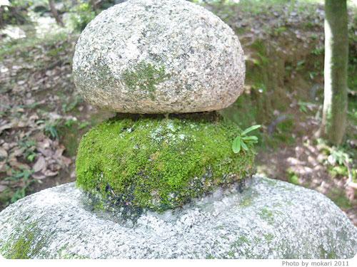 20110922-8 長岡天満宮で苔を見てきた。いいところでした。