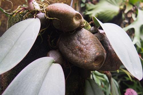 P1254474 植物園 温室 植物
