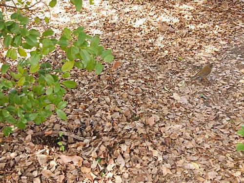 P2263188 梅を見に、京都府立植物園へ(2013年)