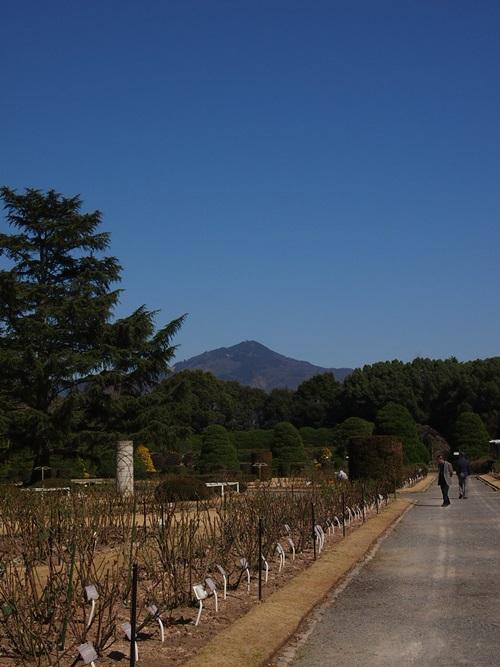 P3124036 3月桜はまだ。京都府立植物園、これから楽しみな花(2013年)