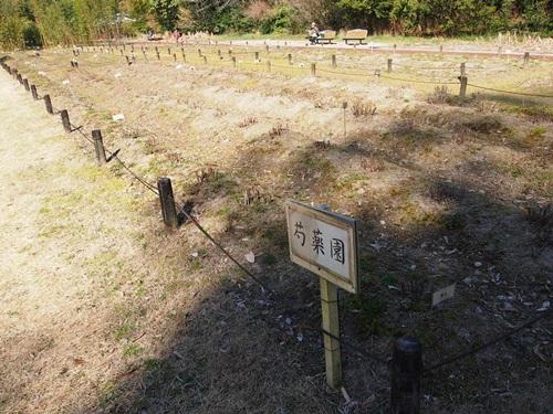 P3124055 3月桜はまだ。京都府立植物園、これから楽しみな花(2013年)