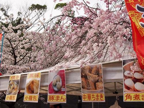 P3314809 円山公園で花見(2013年3月)