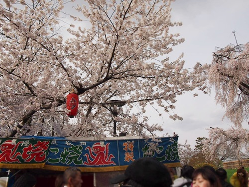 P3314819 円山公園で花見(2013年3月)