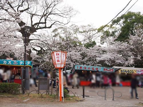 P3314845 円山公園で花見(2013年3月)