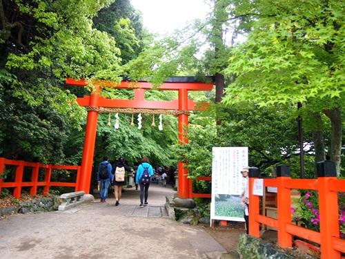 P5152971 大田神社でかきつばたを見る(2014年5月)