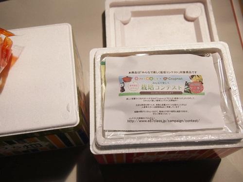 P5176111 ハーブの栽培セット、おうち畑「きりっと香味野菜」を育てるぞ
