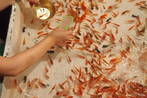 P7260328 下鴨神社の御手洗祭に行ってきた(2014年)
