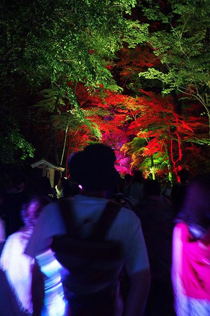 下鴨神社 糺の森の光の祭 参道