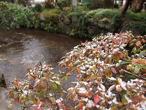 PC100851 京都に雪がふりました。ちょっと積もりました。(2012年12月)