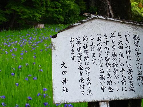 R1154095 大田神社2012年 かきつばたを見に