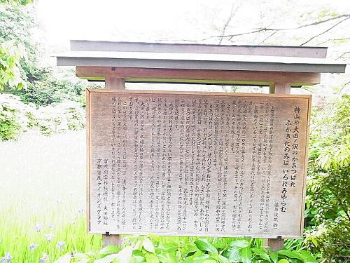 R1154096 大田神社2012年 かきつばたを見に