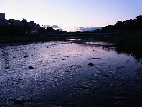 R1156861 鴨川にヌートリアがいるらしいので探してみたが今回は見つからず